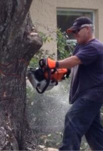 Tree removal in Clearwater, Fl.
