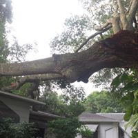 Tree Removal in Safety Harbor Fl.
