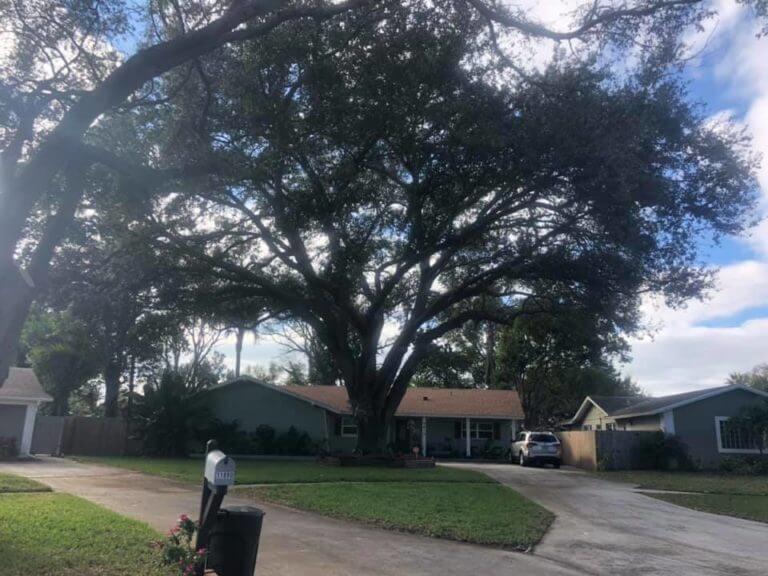 Tree service in Seminole FL