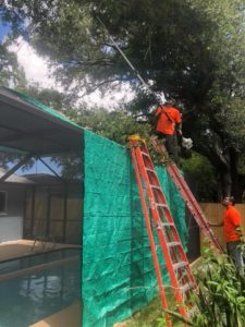 Tree Service Clearwater